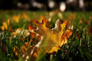 Leaves on the grass 1 by spoii