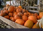 Pumpkins 7 - Overripe by ceeek-stock