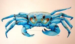Blue Spirit Crab Loves You by theancientofdays