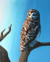 Barred Owl by Aki-rain