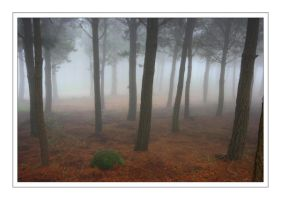 Bosque by Annabelle-Chabert