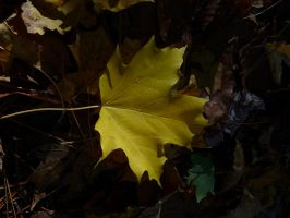yellow leaf in autumn by PUBLIC-DOMAIN-PICS