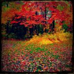Fall and it's Many colors by whi-chan