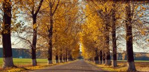 The road through autumn by dawgama