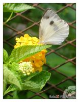 Photo: Butterfly on a Flower by Insidious-Ink