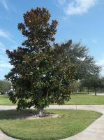 Southport park [2] by vanazza