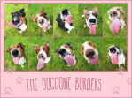 THE Doggone Borders - project by jollyvicky