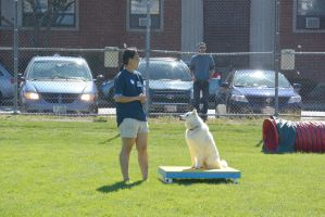 2014 Dog Festival, Agility Contest 22 by Miss-Tbones
