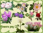 Flowers Png-2 by roula33
