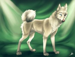 The Nordic dog projet [CONTEST] : Inu by wolfinrahalify