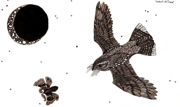 Nightjar and Moth... by HieronyusBerruecos