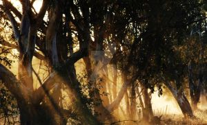 Light through trees by watsup223