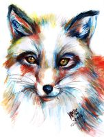 Fox portrait ~ by Gravom