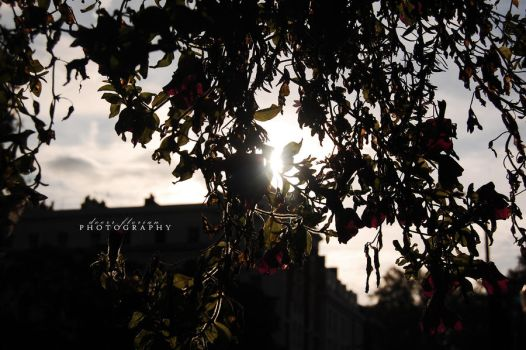 hiding sun . by trulynothingpersonal