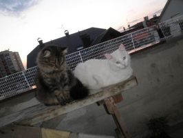 My two cats by dupinema