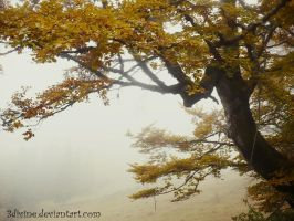 Foggy Autumn I by 3divine