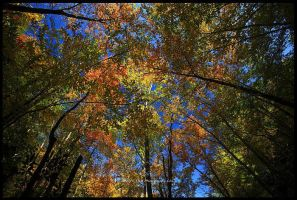 Canopy Of Color by TRBPhotographyLLC