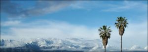 Two Palm Trees with Mountain by ASlyswine