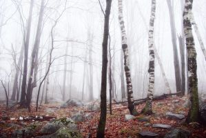foggy_woods by RobertMichael