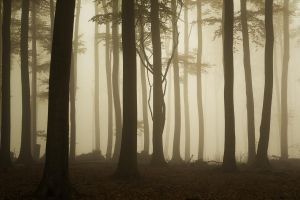 ..mystical forest.. by tbencik-photography
