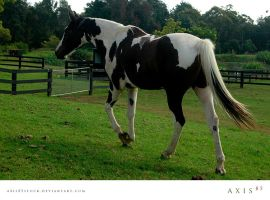 horse7_copabella by axis85stock