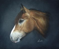 Natalie - horse portrait by chipset