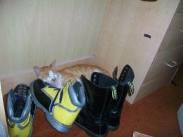 My Cat on my Cosplay boots by SoraSkater