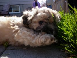 Shy But Playful by Veronyak