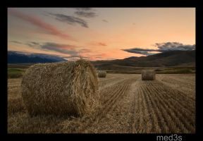 sunset on a weath field by med3s