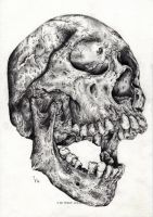 Skull - study by IlseVerbeek