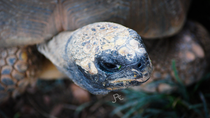 turtle by jdrephotography