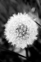blowball by LovesTheMuffin