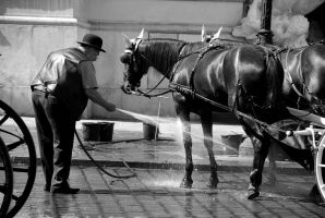 The horse shower by CarlosBecerra