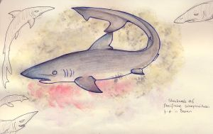 SW day 6 - Pacific Sharpnose by Verduvlo