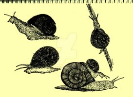 snails by Solitae