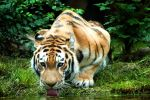 Zoo Leipzig 02 by Mellz-Photography