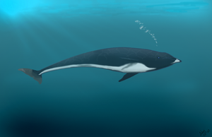 Northern Right whale Dolphin by AngelMC18