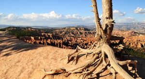 Backbone of Bryce by darkhorse11