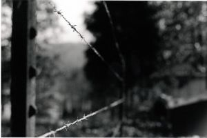 Barbed Wire by cmarhoover