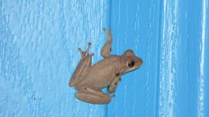 Frog on a blue door by Dyda81