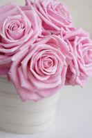 Pink Roses II by onelook