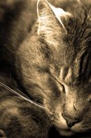 Sepia Cat by Frosttail