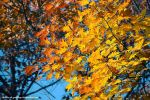 dance of leaves by Iulian-dA-gallery