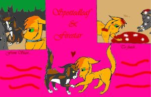 From start to Finish, Spottedleaf X Firestar by Cardinalpaw