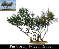Bush 01 by Brizzolatto55