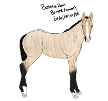 Lineage Foal 4 SOLD by ShiningSparkRanch