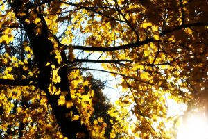 Golden Leaves by AndehDulac