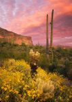 Sonoran Romance by PeterJCoskun