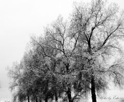 Trees of Winter by 1001G
