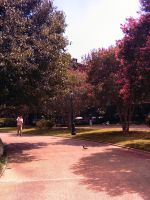 Jackson Square Pathway by twofortheprice